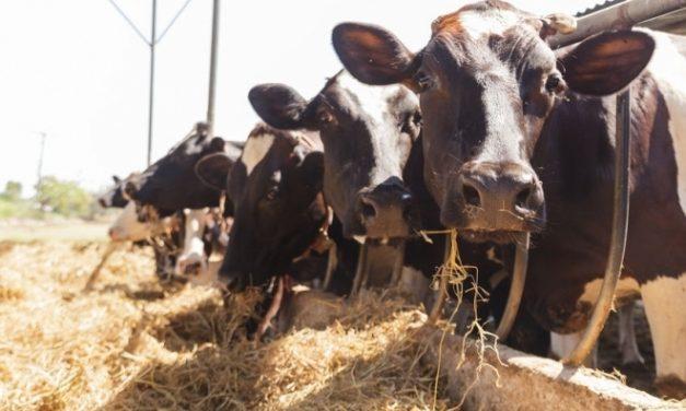 Măsuri de sprijin pentru sectorul bovin în contextul pandemiei Covid 19